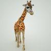 07 57 41 861 mark florquin giraffe africa 3d model 5 4