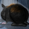 08 21 17 119 c black fur03 4