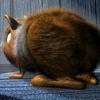 08 21 19 900 c brown fur03 4