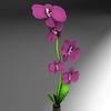 08 45 23 468 flores2 4