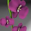 08 45 25 270 flores3 4