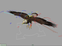 Free Bald Eagle_Rigg for Maya 0.0.2