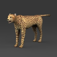 Low Poly Leopard 3D Model