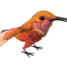 HummingBird 02_3ds max 2010 3D Model