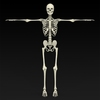 09 19 32 324 realistic skeleton 01 4