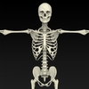 09 19 32 406 realistic skeleton 02 4