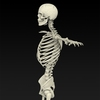09 19 32 470 realistic skeleton 03 4