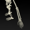 09 19 32 569 realistic skeleton 04 4