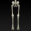09 19 32 654 realistic skeleton 05 4
