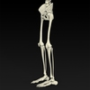 09 19 32 762 realistic skeleton 06 4