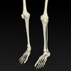 09 19 32 850 realistic skeleton 07 4