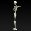 09 19 32 934 realistic skeleton 08 4