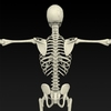 09 19 33 14 realistic skeleton 09 4