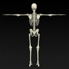 09 19 33 159 realistic skeleton 11 4