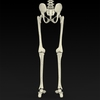 09 19 33 87 realistic skeleton 10 4