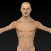 09 20 53 357 muscular human 02 4