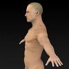 09 20 53 471 muscular human 03 4