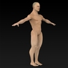 09 20 54 479 muscular human 10 4
