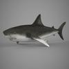 09 20 55 227 realistic shark 01 4
