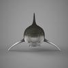09 20 55 340 realistic shark 02 4