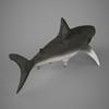 09 20 55 579 realistic shark 05 4