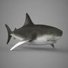 09 20 55 626 realistic shark 06 4