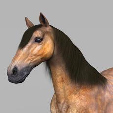 Realistic Muscular Horse 3D Model