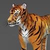 09 21 04 801 realistic tiger 02 4