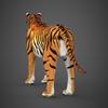 09 21 05 194 realistic tiger 05 4