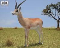 Grant's Gazelle (Nanger Granti) 3D Model