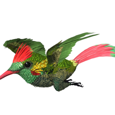 HummingBird 03_maya2010 3D Model
