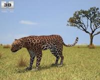 Leopard (Panthera Pardus) 3D Model