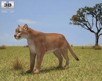 Cougar (Puma Concolor) 3D Model