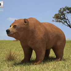 Grizzly Bear (Ursus Arctos Horribilis) 3D Model