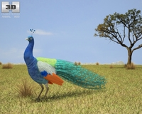 Indian Peafowl (Pavo Cristatus) 3D Model