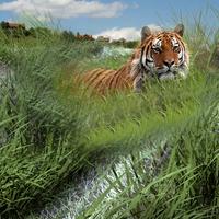 Grass render composite cover