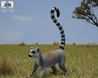 Ring-Tailed Lemur (Lemur Catta) 3D Model