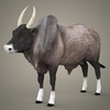 19 43 48 62 realistic ox 01 4