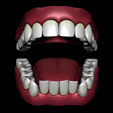 Teeth Model with Textures 3D Model