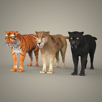 Tiger Lion & Black Leopard 3D Model
