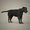 19 44 09 553 tiger lion black leopard 13 4