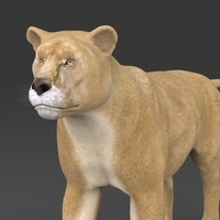 Realistic Lioness 3D Model