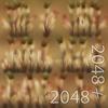 19 44 59 170 10 dry timothy grass 4