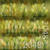19 45 00 151 18 bent grass texture 4