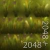 19 45 00 556 21 cattail grass texture 4