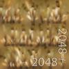 19 45 01 21 24 dry plains grass 4