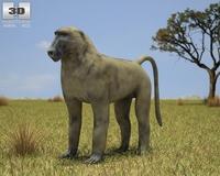 Chacma Baboon (Papio Ursinus) 3D Model