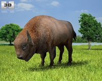 European Bison (Bison Bonasus) 3D Model