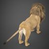 19 48 45 225 realistic lion 05 4