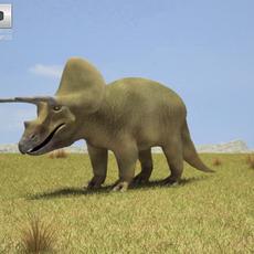 Triceratops (Triceratops Horridus) 3D Model